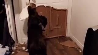 Dog decimates door in order to go outside
