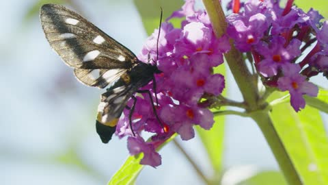 A Moth Up Close