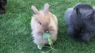 Wind blows through bunnies' fur in majestic slow motion