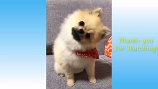 Funny Video | Cute and Crazy Animal Compilation.