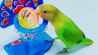 Parrot bird practicing some sports