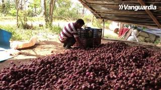 El cultivo de alimentos especial campesinos 2020