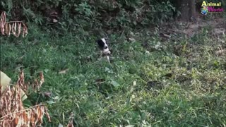 Rescue dog story - Puppy from King Cobra Attack Be Rescued In Time