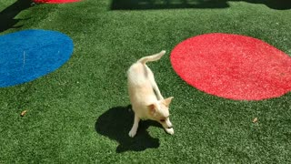 puppy wants to play on the playground