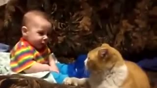 Cat fight with little children