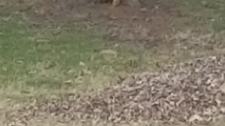 Squirrel having fun
