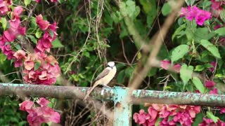 Bird on a metal fence - With great music