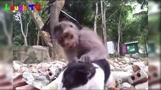 Funnesit monkey and cat