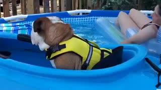 Bulldog in a Canoe