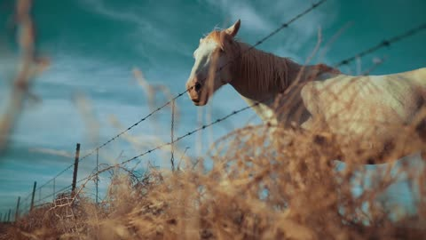 Amazing View Of Male Horse Near Farm Fence