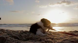 Dogs love the sea