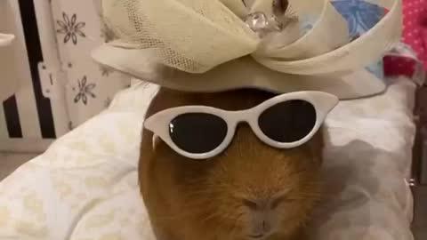 Funny animal video doing fashion