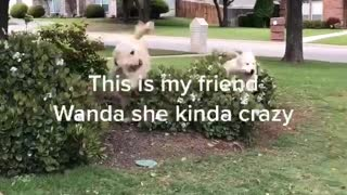 Pup explodes over bush