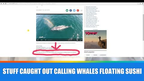 Fairfax NZ or Stuff.co.nz calls Whales 'floating sushi'