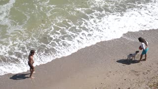 Dog Summer beach sea Ocean