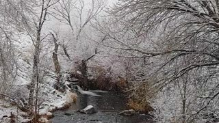 Snow falling at the Owens River in Bishop California
