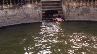 Dedicated Dog Helps his Human