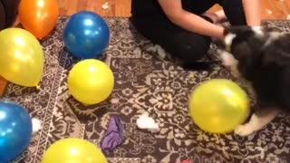 Con popping balloons