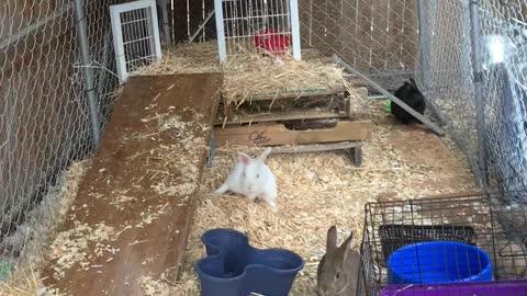 Bunny colony in Denver Colorado