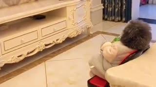 Funny Dog acting Like Human 🐈🤣😂