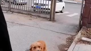 dog helping people in Need