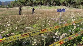 The most beautiful flower island in Korea
