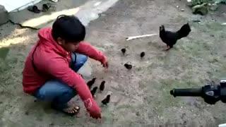 Ninja hen