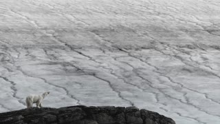 Photographer Captures Stunning Arctic Wildlife _ Short Film Showcase.mp4