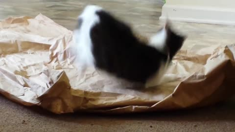 Funny cat attacks packing paper