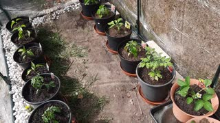 Spring UK 2021 Greenhouse Update