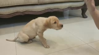puppy training movement...