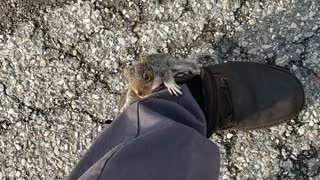 Squirrel on my leg