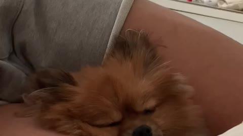 Cutie sleeping between my legs