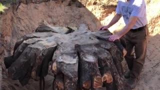 Bobble Stump