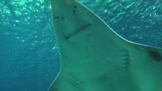 Strange shark under the ocean.