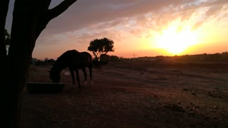 Sunset And Horse