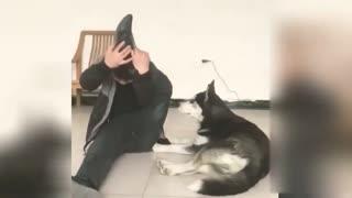 Interesting Dog Imitate Human Leg Skills