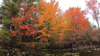 Fall Foliage NH