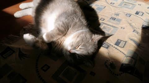 A Cat Lying Lazily On The Carpet Floor 2
