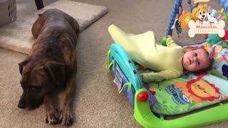 SUPER CUTE baby and dog moments