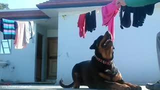 15 Dangerous Dogs You Should FEAR