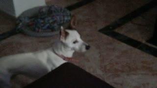 My crazy puppy