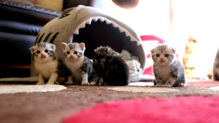 Adorable Kittens Hanging Out