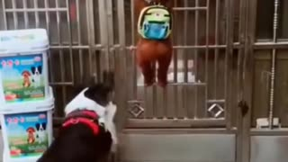 #FUNNY DOG OPENS THE DOOR FOR ITS FRIENDS