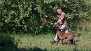 Basic Dog Training Commands Every Dog Should Know!