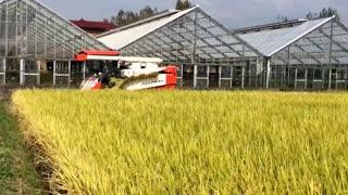 AG7114R Harvesting