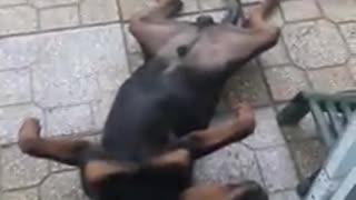 Sleep Behavior of Dogs