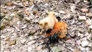 dogs vs chickens