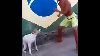 El perro tiene ritmo