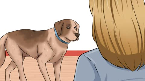 How much you know about your dog? you will know more if you learn it